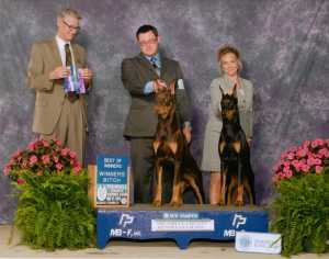 Ch. Bolero Cold Cash V Deerfield and Ch. Bolero Little Black Dress UP V Deerfield OA OJ