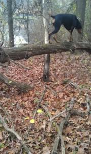 Lake on a branch