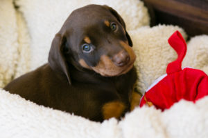 nancy-denny-puppy-images-13