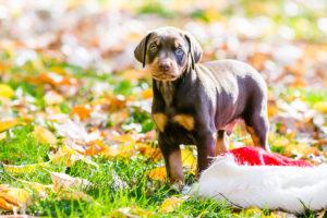 nancy-denny-puppy-images-16