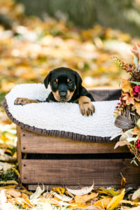 nancy-denny-puppy-images-19
