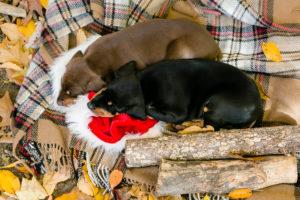 nancy-denny-puppy-images-24