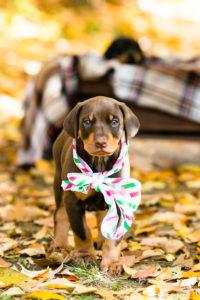 nancy-denny-puppy-images-3