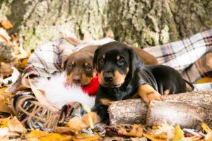 nancy-denny-puppy-images-5