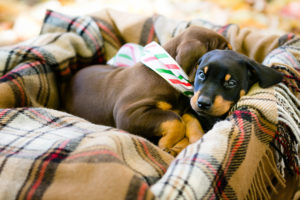 nancy-denny-puppy-images-7